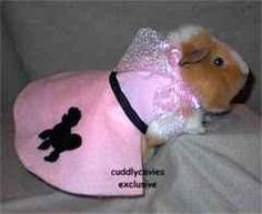 Every guinea pig needs a poodle skirt. Baby Guinea Pigs, Guinea Pig Toys, Guinea Pig Care, Pet Pigs, Hamster Clothes, Guinea Pig Clothes, Pet Clothes, Guinea Pig Costumes, Animal Costumes