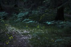 La producción de luz por parte de muchos animales es un fenómeno interesante, siendo el de los bichos de luz uno de los más vistosos.
