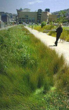 Rain Garden with Juncus and native grasses to catch and filter rainwater. Water Barrel, Rain Barrel, Urban Landscape, Landscape Design, Garden Compost, Vegetable Garden, Water Management, Rainwater Harvesting, Exterior