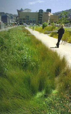 Natural style rain garden, adjacent to townhouses on intercampus transitway