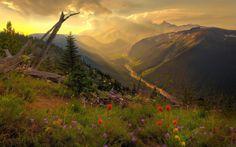 Sedersi all'ombra, in una bella giornata, e guardare in alto verso le verdi colline lussureggianti, è il miglior riposo. (Jane Austen)