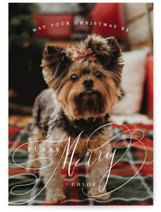 Free Puppies For Adoption, Yorkie Puppy For Sale, Unique Animals, Holiday Postcards, Holiday Photo Cards, Animal Photography, Blessings, Blessed, Art Prints