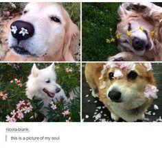 Dogs of Tumblr - Album on Imgur
