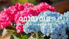 Ορτανσία - 9 μυστικά για τη φροντίδα της  🌷 Η ορτανσία είναι ένα διαχρονικό λουλούδι που εδώ και δεκαετίες στολίζει τις αυλές και τα μπαλκόνια των ελληνικών σπιτιών. Στο σημερινό βίντεο, μαθαίνουμε τα μυστικά για να απολαύσουμε όμορφες ορτανσίες με πλούσια ανθοφορία με όσα πρέπει να γνωρίζουμε για το πότισμα, το κλάδεμα, τη λίπανση και την προστασία τους από ασθένειες!