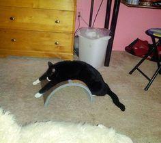 Funny cats - part 73 pics + 10 gifs), funny cat, cat pics Silly Cats, Cats And Kittens, Funny Cats, Funny Animals, Cute Animals, Animal Funnies, Bad Cats, Cool Cats, I Love Cats