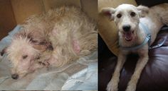 32 Uplifting Before & After Pictures Of Rescue Animals : 32 Reasons Why You Should Adopt A Rescue Animal
