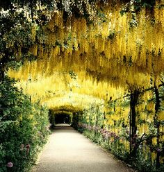 walkway with hanging flowers