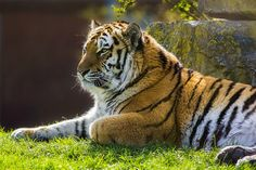 Bagai-Tim-Heffernon 111215-3 | by Marwell Wildlife