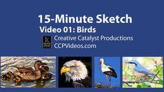 Sketching Birds- 15 Minute Sketch Practice Video 01 - YouTube