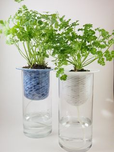 Garden Ideas on Pinterest | Self Watering, Planters and Rooftop ...