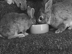 Mother and baby bunny share a meal - August 8, 2016
