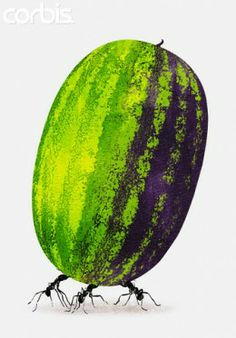 The Humble Watermelons: The Essentials, a Must-Read for Summer Food Lovers