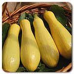 Organic Success PM Yellow Straightneck Summer Squash
