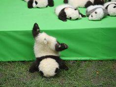 762 Suka, 12 Komentar - Panda_cute_MyLove (@panda_cute_mylove) di Instagram