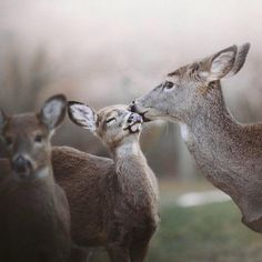 """""""No more kisses, Mom!""""How cute is this?  #nature #love #regram @sfisherx"""