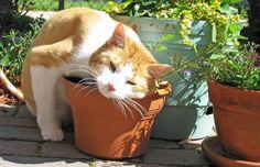 Para escalar, comer, cheirar, se esconder… os gatos amam plantas! Tanto em ambientes externos quanto internos é possível levar um pouco da natureza para o seu peludo, beneficiando sua saúde f…