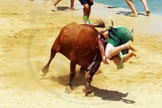 Forcado Sumo, Wrestling, Sports, Animals, Lucha Libre, Hs Sports, Animales, Animaux, Animal