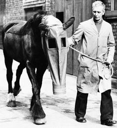 "Horse Gas Mask A docile horse wears a gas mask as a precaution against gas attacks, on March 27, 1940. It was developed by ""Our Dumb Friends League,"" a humane society in London, England. (AP Photo"