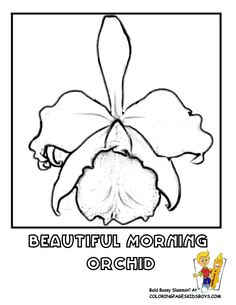 orchid drawings free - Google Search
