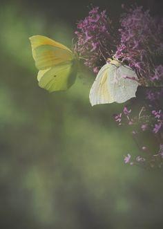 A butterfly's dream