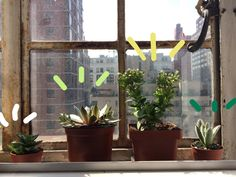 affable-ella:   My city window plants!!