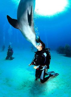 So wanna do! dolphin sea underwater scubadiving @ ocean wetsealsummer contest