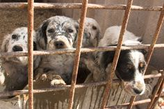 67 Best Puppy Mills Murder Images Puppy Mills Animal Rescue