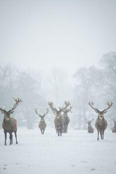 in de winter ...