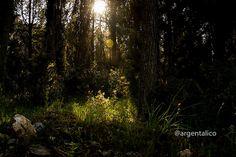 Visita a la Foresta de Mercadante en Puglia, sur de Italia, Bosques, Parques Nacionales y Reservas Ecológicas italianas para ver y visitar.
