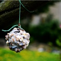 Instead of the normal fat balls for birds that end up falling apart, try these fir cone feeders that allow the birds somewhere sturdy to eat