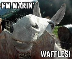 I'm makin waffles! 30 Funny animal captions - part 13 pics), animal pictures with captions, funny memes shrek lol Funny Shit, Funny Cute, The Funny, Hilarious, Funny Stuff, Funny Farm, Memes Humor, Funny Memes, Cat Memes