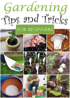 Here are some of clever tricks for your garden that you have not heard of before.