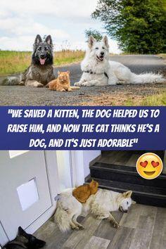 "#Kitten #Helped #Raise #Cat #Dog #Adorable"""