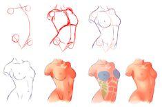 Female Anatomy by ryky.deviantart.com on @deviantART