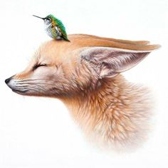Fox & hummingbird art