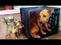 Mama Dog Was Devastated After Losing Her Pups. But When She Sees These Two? My Heart Can't Take It! - YouTube