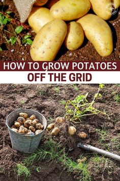 How To Grow Potatoes Off The Grid - When living off the grid, potatoes should be. How To Grow Pota Organic Vegetables, Growing Vegetables, Organic Gardening, Gardening Tips, Home Vegetable Garden, Off The Grid, Permaculture, Container Gardening, Garden Tools