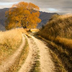 Backroad (South Island, New Zealand) by Sue H