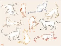 Cat Sketches Find more at https://www.facebook.com/CharacterDesignReferences if you ar looking for: #art #character #design #model #sheet #illustration #best #concept #animation #drawing #archive #library #reference #anatomy #traditional #draw #development #artist #animal #animals #felines #cats #cat