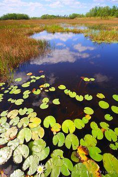 Grassy Waters Preserve (West Palm Beach, Florida)