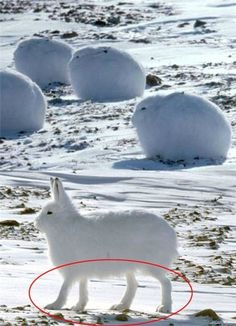 몰랐던 토끼의 비밀