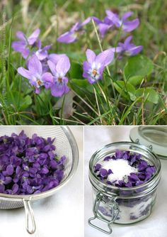 The distinctive purple flowers of Wild violets make the easy to identify. Both the flowers and leaves are edible and make a delicious addition to salads. The flowers have a wonderfully sweet aftertaste -- for a special occasion you can candy them for a beautiful topping to cake or pastry. - http://www.squidoo.com/keepyourlawnedible
