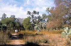 Argentina Live: El Parque Nacional Chaco se ubica en el centro este de la provincia homónima.