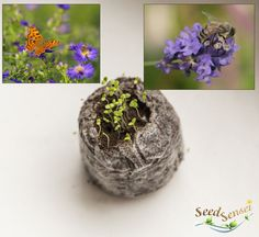 Housewarming gift flowers for bees butterflies by TheSeedSensei