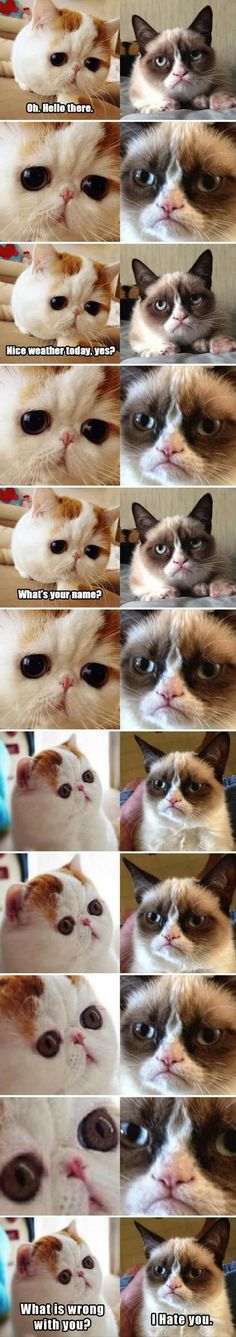 WHAT'S WRONG WITH YOU?! Lol... I am Sad Cat... You May May are Grumpy Cat... This is how I feel most of the time...lol.
