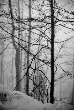 Forest poetry by Branislav Fabijanic