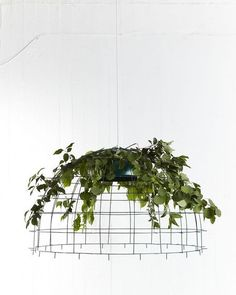 (hanging plants?) this is gona happen on a huge scale thoughts go to a post