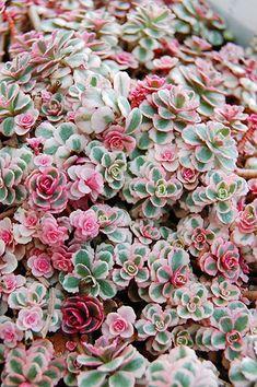 Drought Tolerant Plants, Garden Pots, Photographs, Cover, Succulents, Plants, Flowers, Garden Planters, Photos