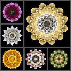Mandala-Mix aus verschiedenen Blüten...von Kreatives by Petra #kreativesbypetra #Mandala #Natur #nature #fotografie #photography #naturfotografie #naturephotography #macro #makro #makrofotogtafie #macrophotography #Spiegelung #Spiegelungen #abstrakt #Abstract #Reflexion #blüte #blossom #blütenzauber #farben #colour #rose #Clematis #kaktus #cactus #taubenbaumblüte #wien #vienna #botanischer_garten #rhododendron Clematis, Petra, Brooch, Rose, Jewelry, Mandalas, Nature Photography, Cactus, Mosaics