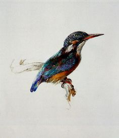 I really want to put this birdy in a picture frame on my wall. Ruskin: Kingfisher
